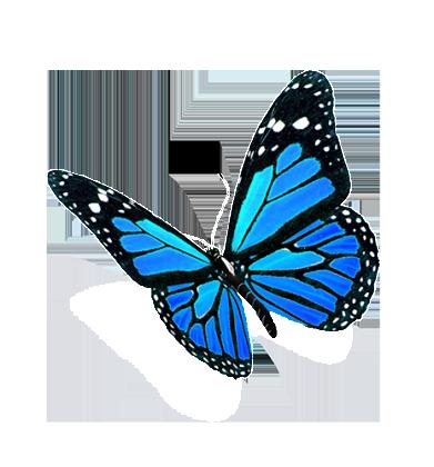 Blue-Butterflies1