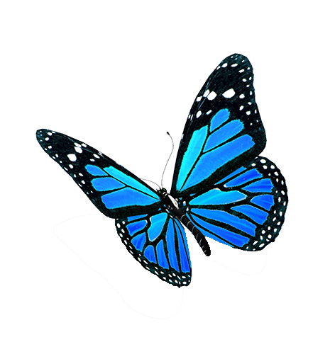 Blue-Butterflies